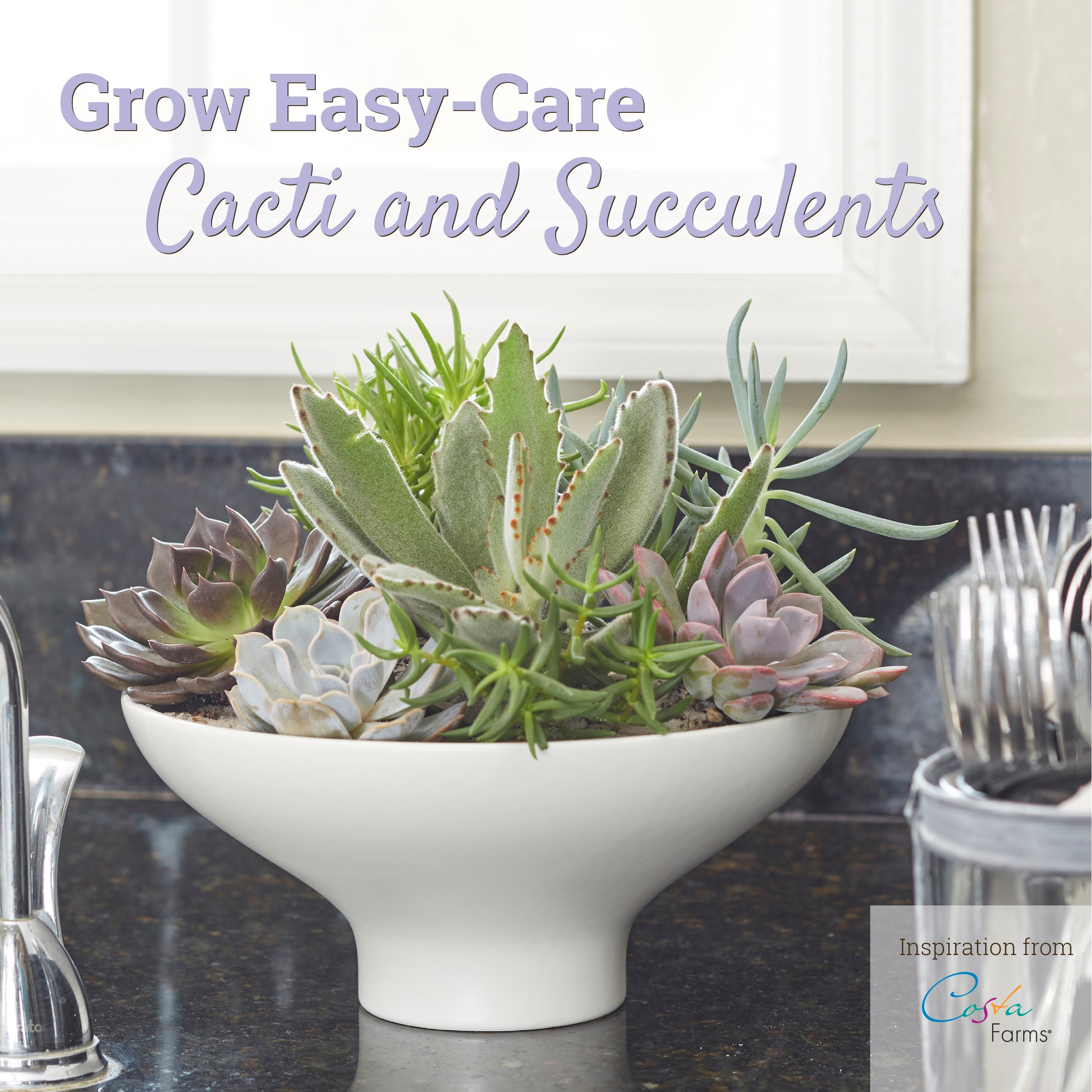 Cacti_and_Succulent_Idea_Book_Cover.jpg