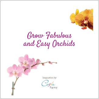 Costa_Farms_Orchids_Are_Easy_Idea_Book_Cover.jpg