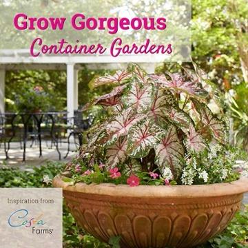 Gardening Idea container gardening idea book