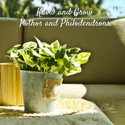 Philo-Pothos Ebook-Cover