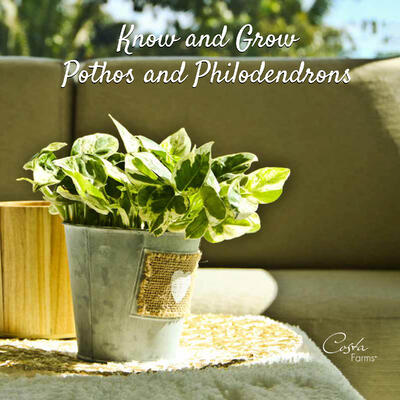 Philo-Pothos Ebook-Cover