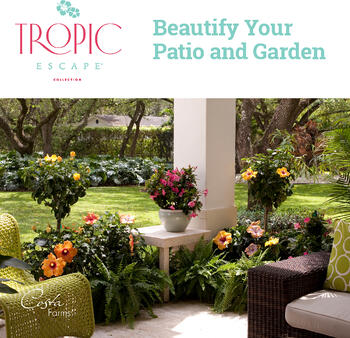 Tropic Escape Ebook Cover - Costa Farms